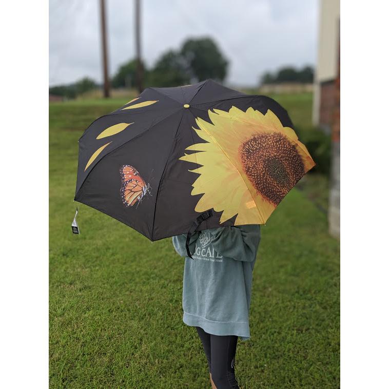 $6.49 (reg $28) Sunflower and.
